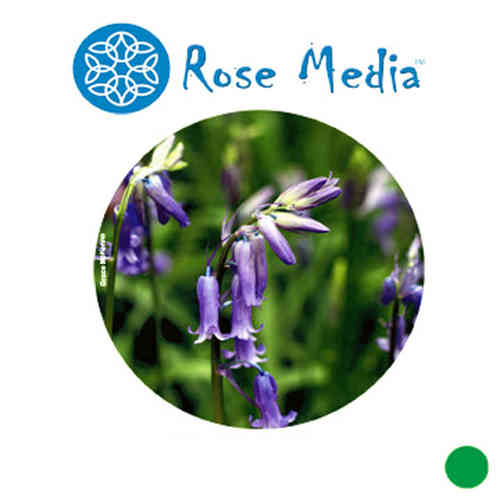 "Rose Media Ultra Satin (17"") x 30m - 270gsm"