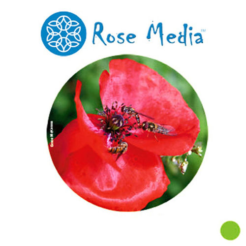 "Rose Media Brilliant White Satin (60"") x 30m - 240gsm"